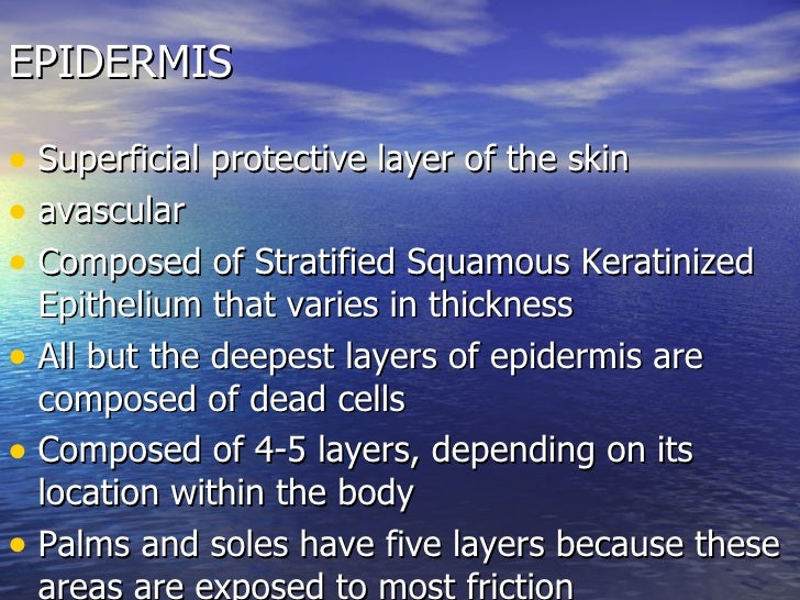 scalelike dead cells full of keratin that constantly slough off