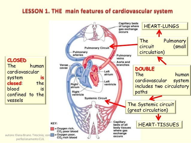 The integrated functions of cardiovascular and respiratory systems