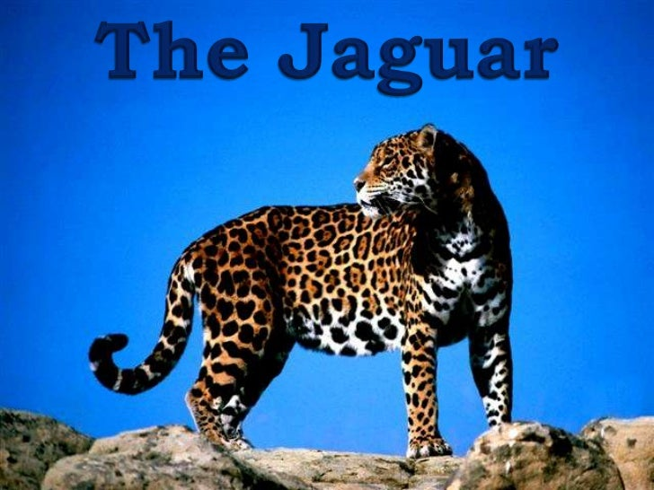 THE  JAGUAR  ppsx