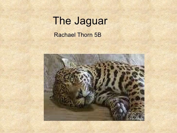 The Jaguar Rachael Thorn 5B