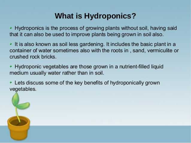 The advantages of producing crops through hydroponics