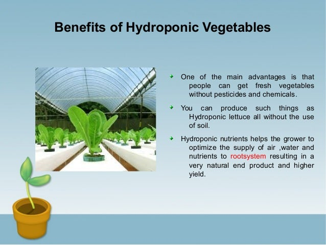 an overview of the advantages of producing crops through use of hydroponics Job board for hydroponics and controlled environment agriculture openings   in my last post, i gave a brief overview of how rockwool is made this post will  focus on the benefits of using rockwool as a substrate in hydroponic systems   the ability to use less input materials also keeps production costs.
