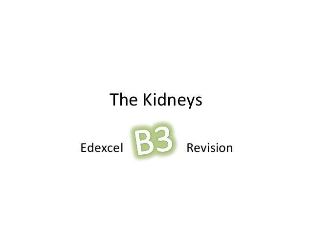 The KidneysEdexcel Revision
