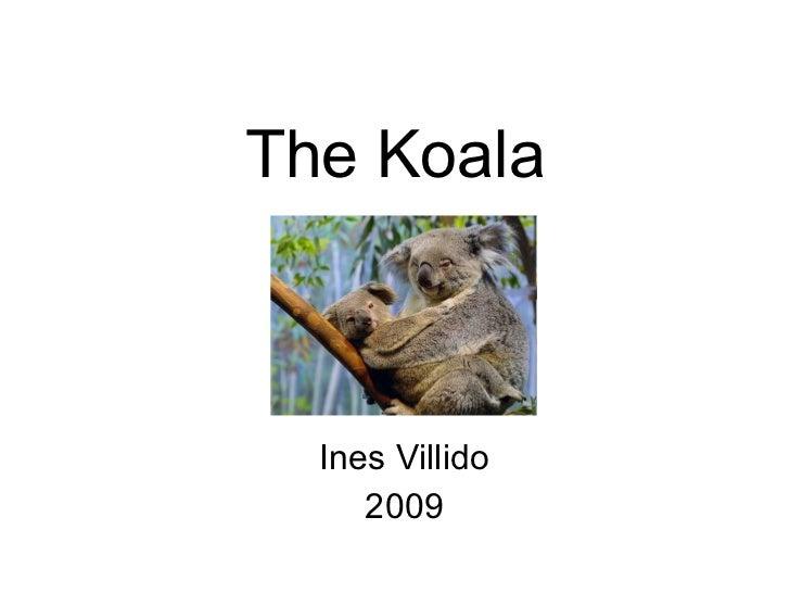 The Koala Ines Villido 2009