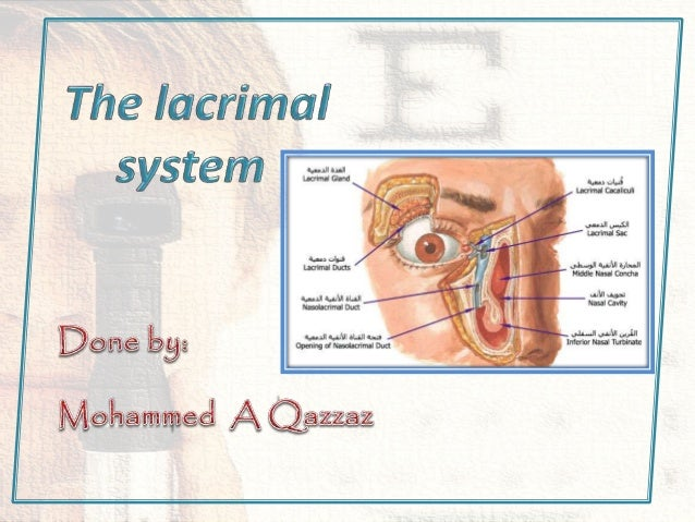 lacrimal system anatomy and clinical
