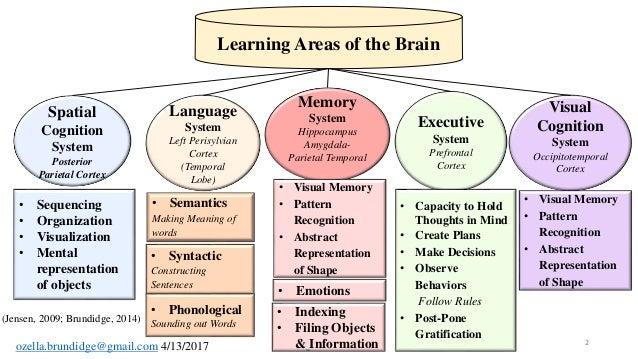 The language learning brain