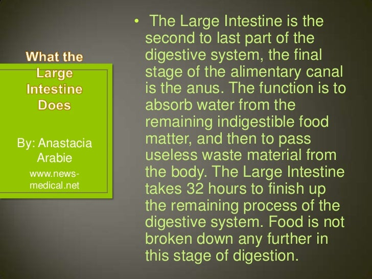 The Large Intestine To The Anus