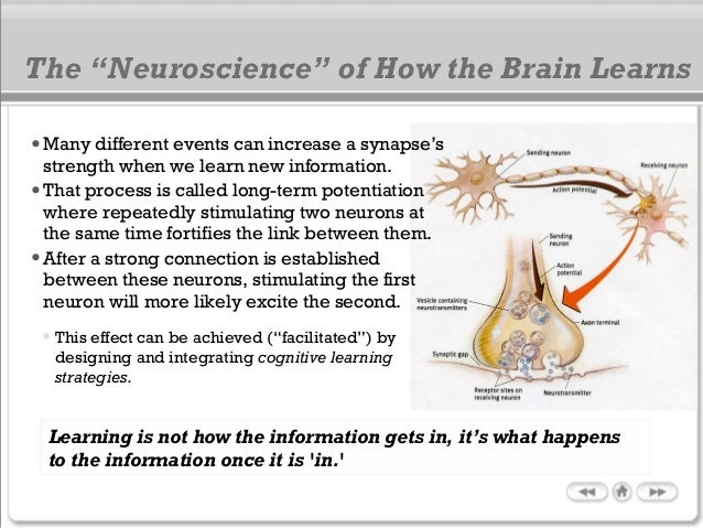 •Many different events can increase a synapse's strength when we learn new information. •That process is called long-term ...