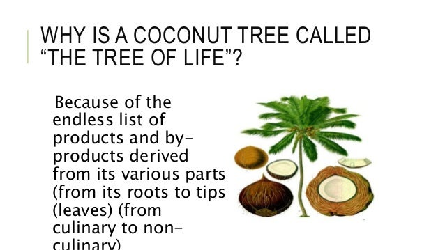 The Coconut Effect