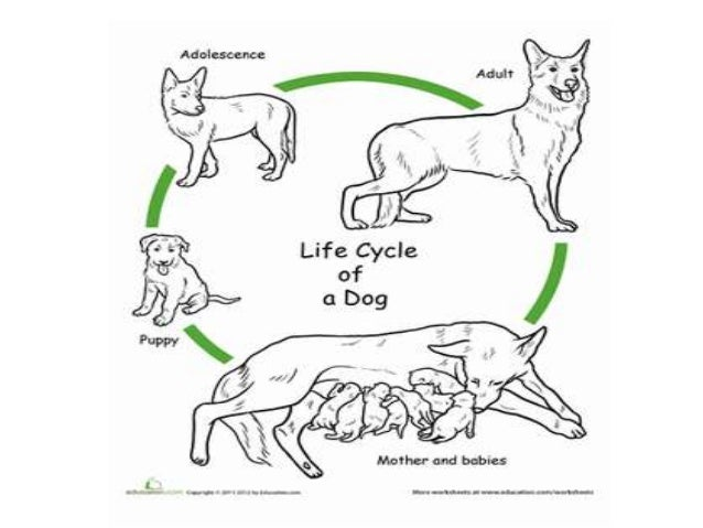 The life cycle