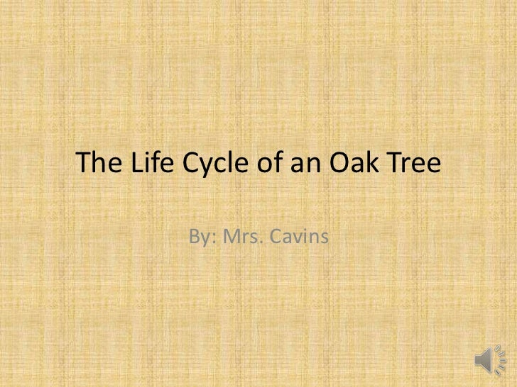 The Life Cycle of an Oak Tree        By: Mrs. Cavins