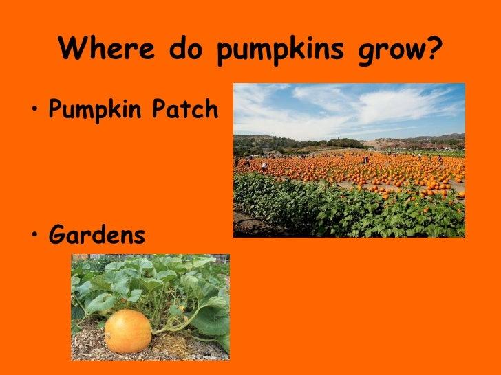 marvelous where do pumpkins grow Part - 1: marvelous where do pumpkins grow amazing ideas