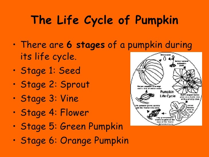 The Life Cycle of a Pumpkin – Life Cycle of a Pumpkin Worksheet