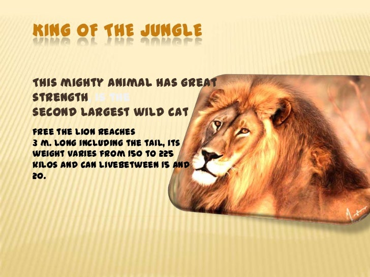King oftheJungle<br />Thismightyanimalhas great strength, is the secondlargestwild cat<br />freethe lionreaches 3...