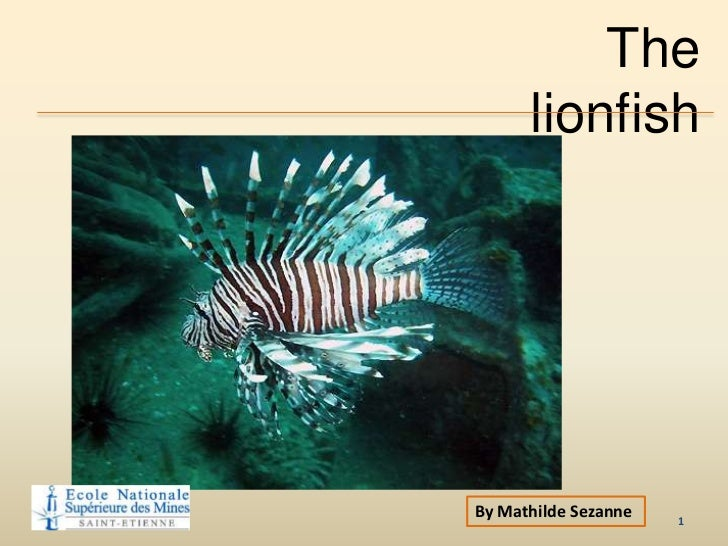 The      lionfishBy Mathilde Sezanne   1
