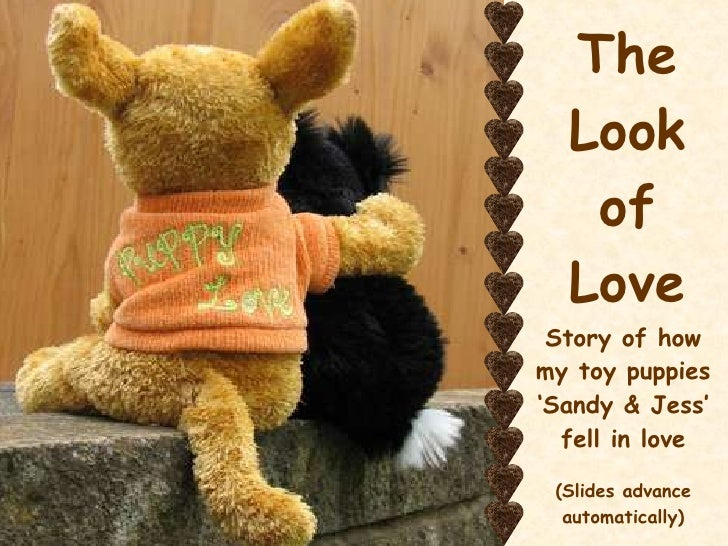 The Look of Love Story of how my toy puppies 'Sandy & Jess' fell in love (Slides advance automatically)