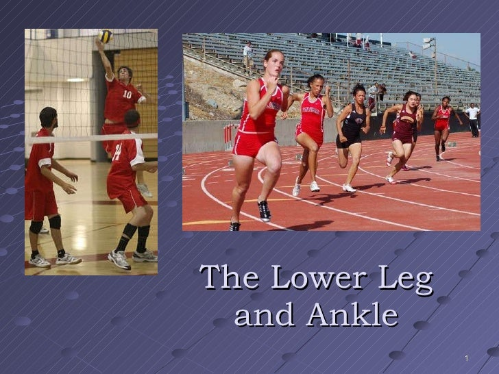 The Lower Leg and Ankle