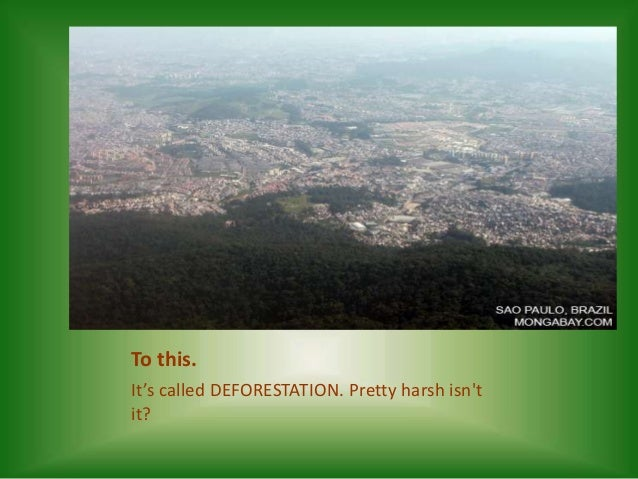 the lung of our earth The world's forests are effectively the earth's lungs  as humans, it is important  we note that our life depends on earth for sustenance.