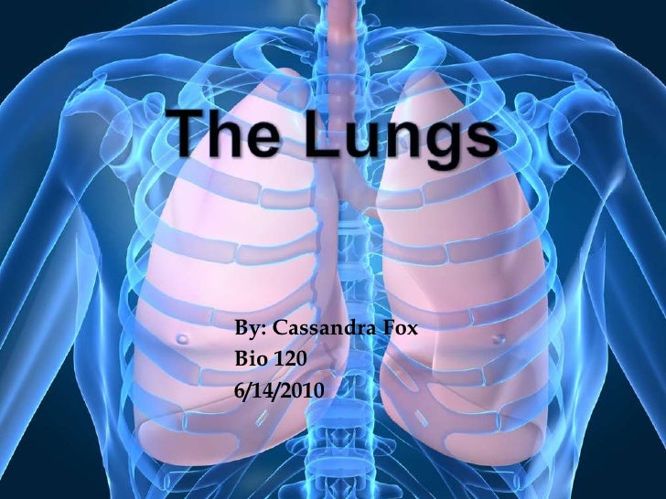 The Lungs<br />By: Cassandra Fox<br />Bio 120<br />6/14/2010<br />