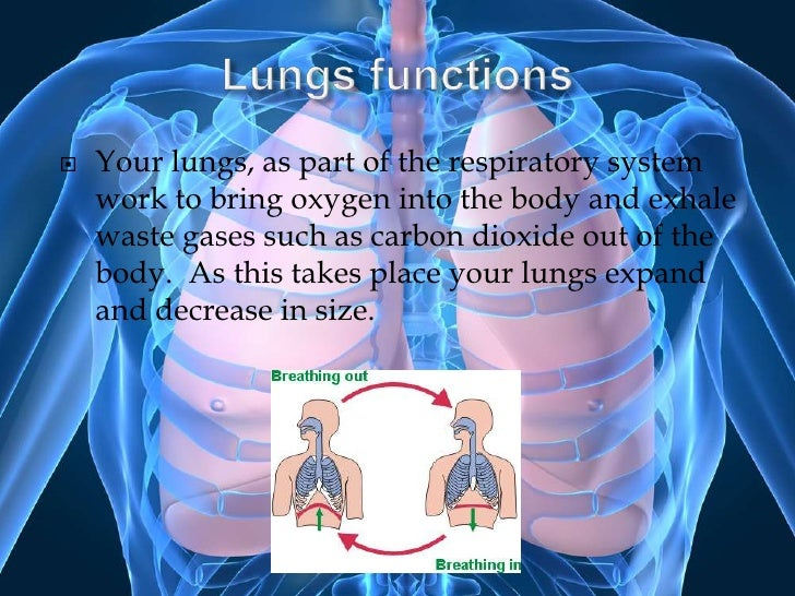 The Lungs Presentation Ch2