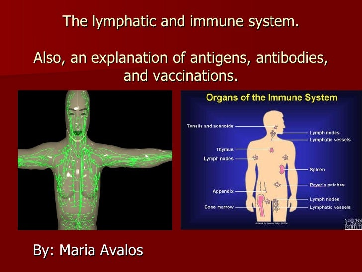 Lymphatic and immune system - 3 terms