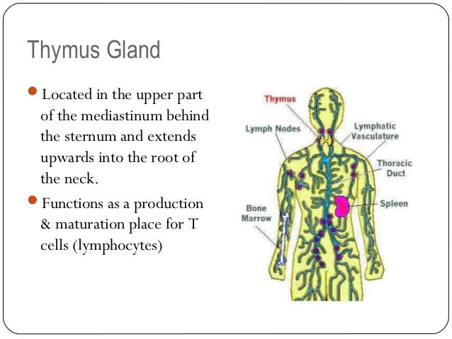 The lymphatic system 08