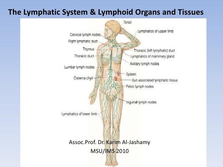 The Lymphatic System & Lymphoid Organs and Tissues                    Assoc.Prof. Dr. Karim Al-Jashamy                    ...