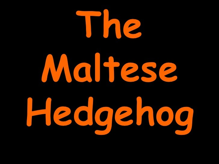 The Maltese Hedgehog