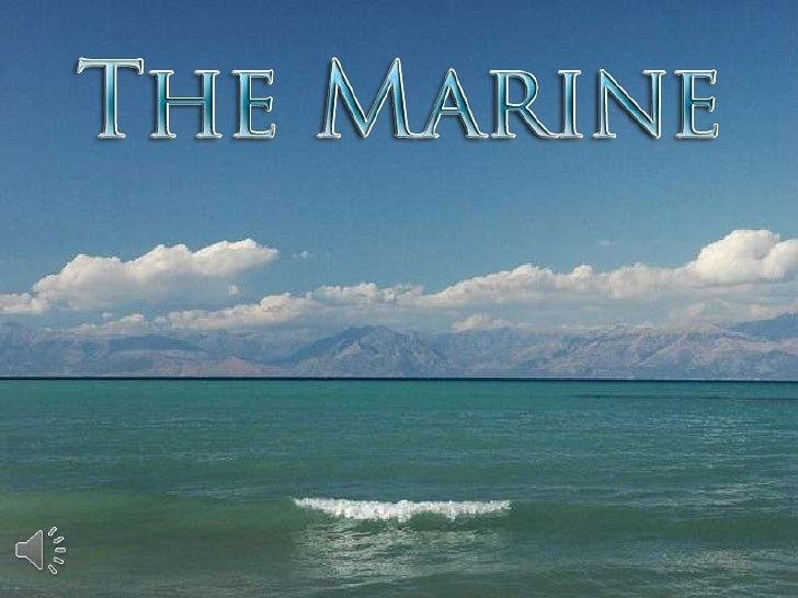 The marine (v.m.)