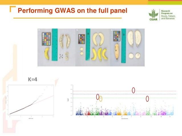 Chapter 11: Genome-Wide Association Studies