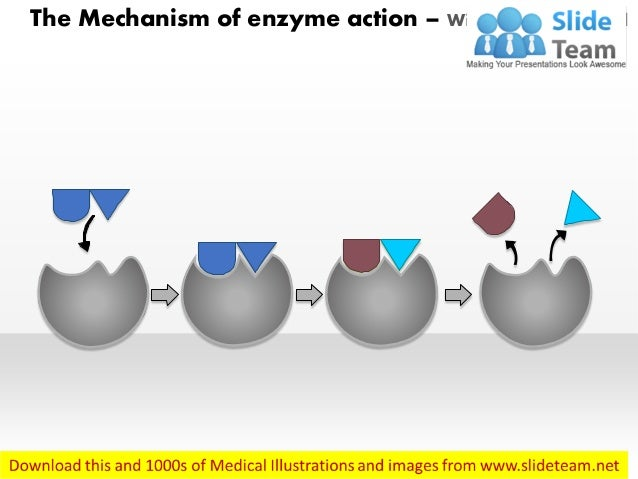 The Mechanism of enzyme action – With Labels Removed