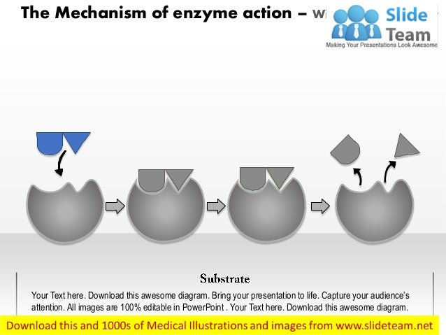 The Mechanism of enzyme action – With Highlighted Part Your Text here. Download this awesome diagram. Bring your presentat...