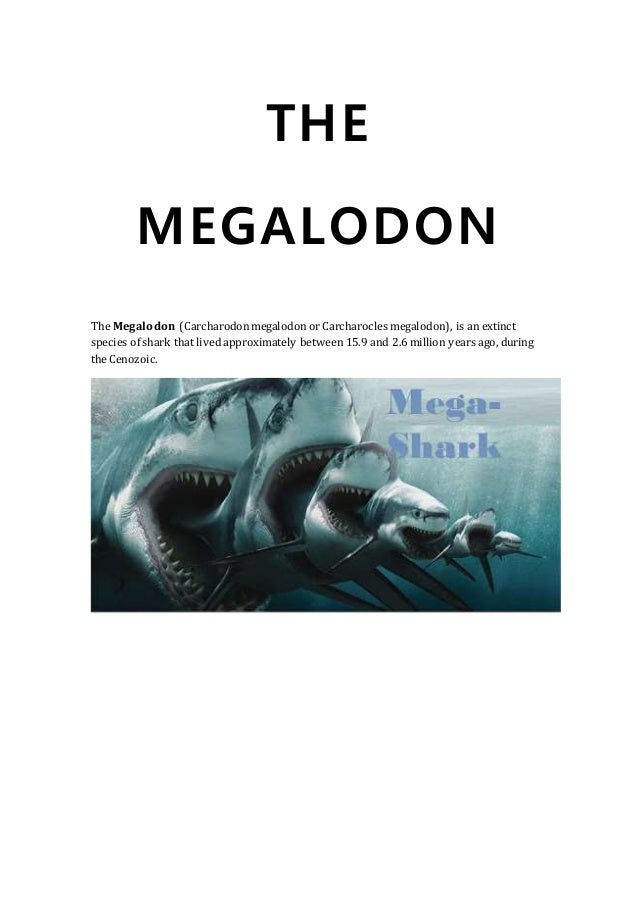 THE MEGALODON The Megalodon (Carcharodonmegalodon or Carcharocles megalodon), is an extinct species of shark that lived ap...