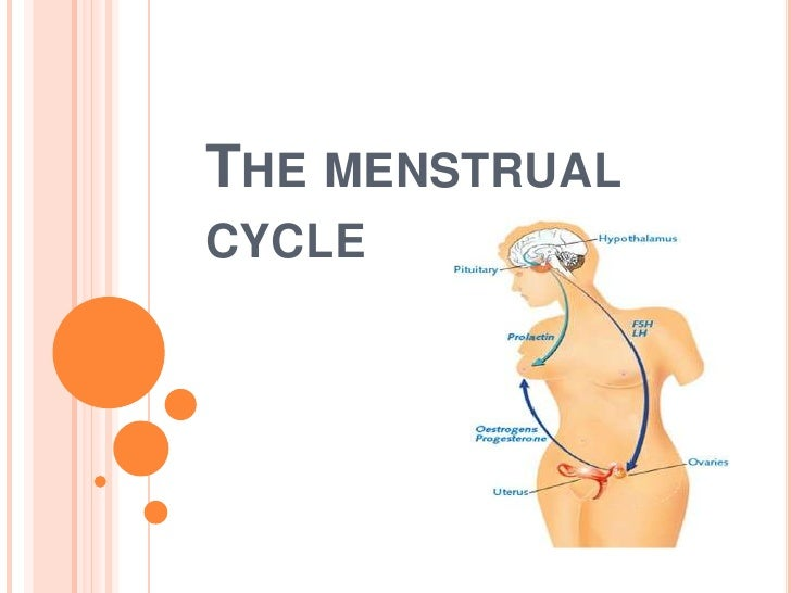 The menstrual cycle<br />
