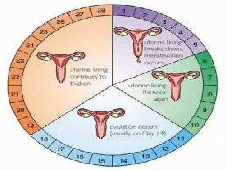 Can you get pregnant 4 days before your periods