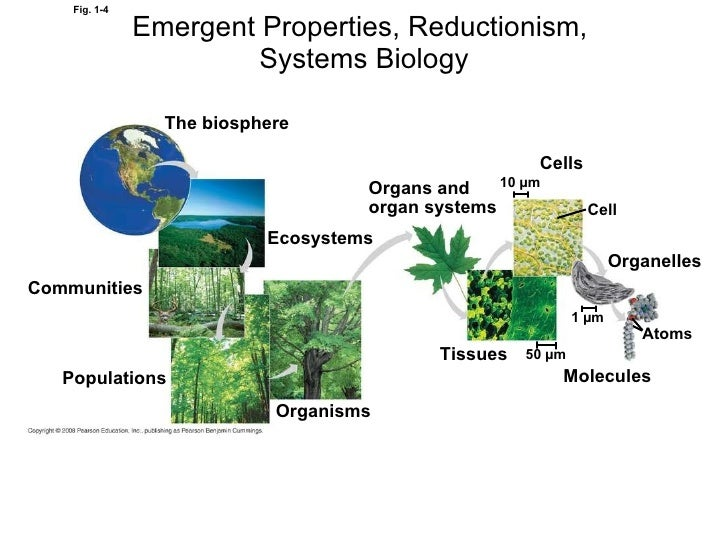 Biology Themes Of Biology