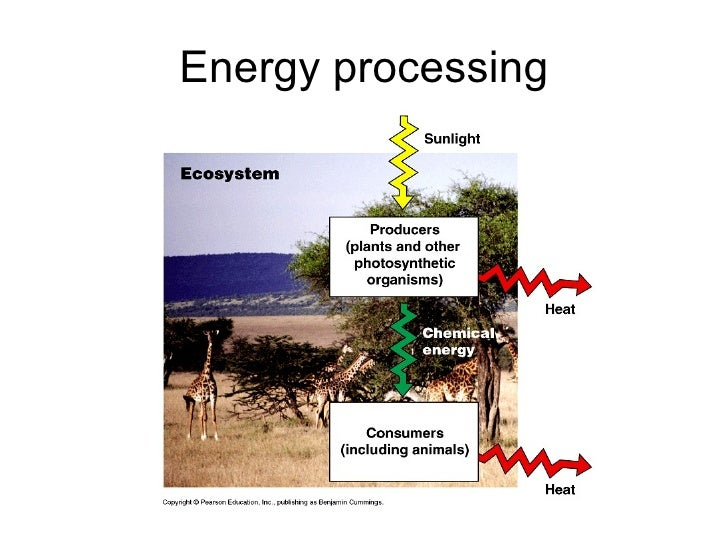 https://image.slidesharecdn.com/themesofbiology-100923091137-phpapp01/95/biology-themes-of-biology-1011-39-728.jpg?cb=1285233622
