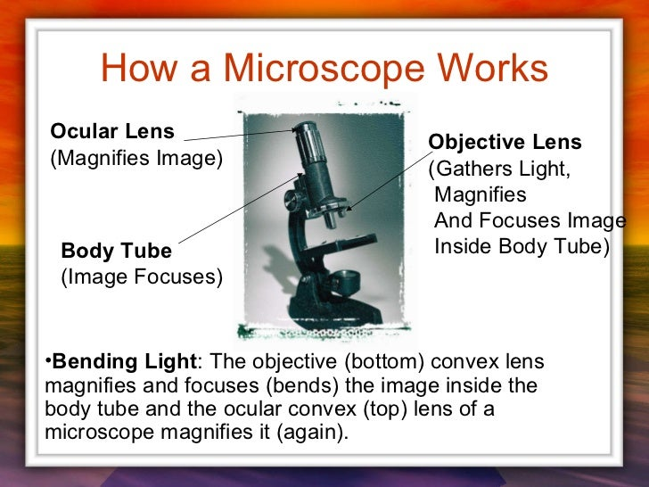 how to use a microscope pdf