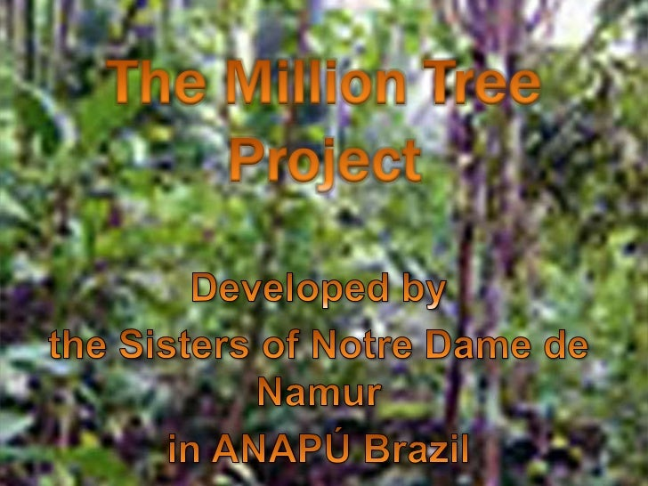 The Million Tree Project<br />Developed by <br />the Sisters of Notre Dame de Namur <br />in ANAPÚ Brazil<br />
