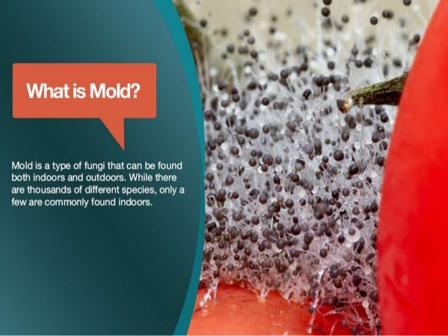 toxic mold essay Allergic reactions), irritants, and in some cases, potentially toxic substances (mycotoxins) inhaling or touching mold or mold spores may cause allergic reactions in.