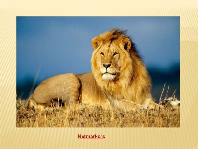 The most interesting facts about lions you can't afford to miss!