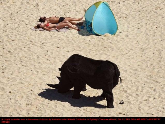 A couple sunbathe near a rhinoceros sculpture by Australian artist Mikaela Castledine on Sydney's Tamarama Beach, Oct. 23,...