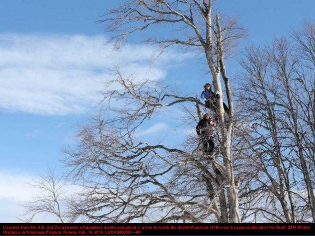 Coaches from the U.S. and Canada wear chimpanzee masks and perch in a tree to watch the downhill portion of the men's supe...