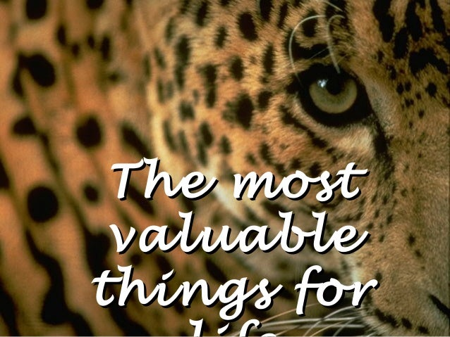 The most valuablethings for