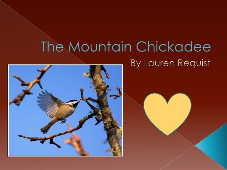 The mountain chickadee has white eyebrows. It has a beak, feathers, and talons. It's gray legs help it camouflage.