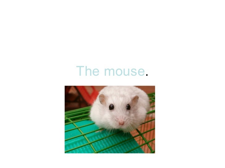 The mouse .