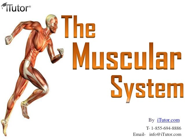the-muscular-system-1-638?cb=1370477875, Muscles