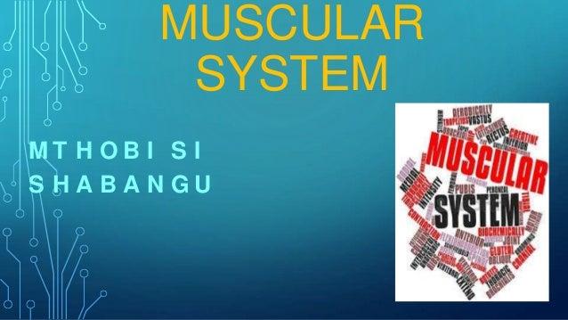 MUSCULAR SYSTEM MT H O B I S I S HABANGU