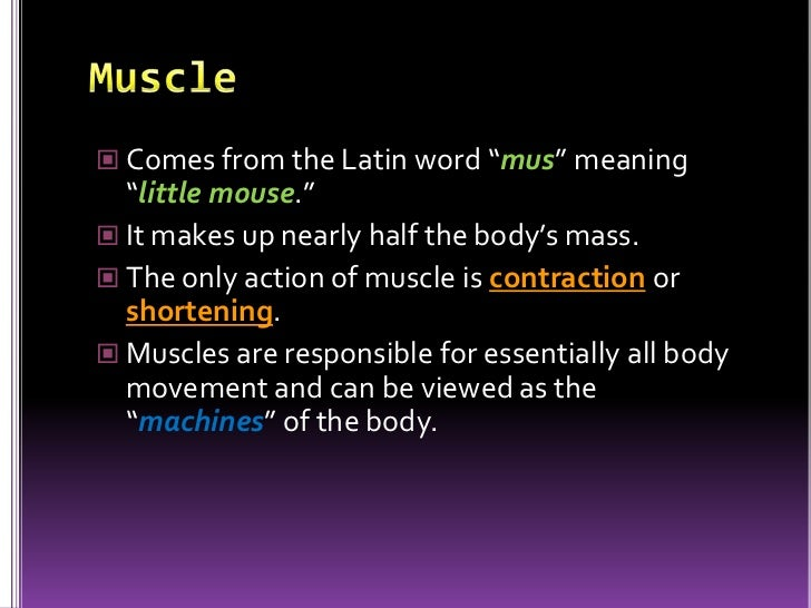 important facts about the muscular system – citybeauty, Muscles