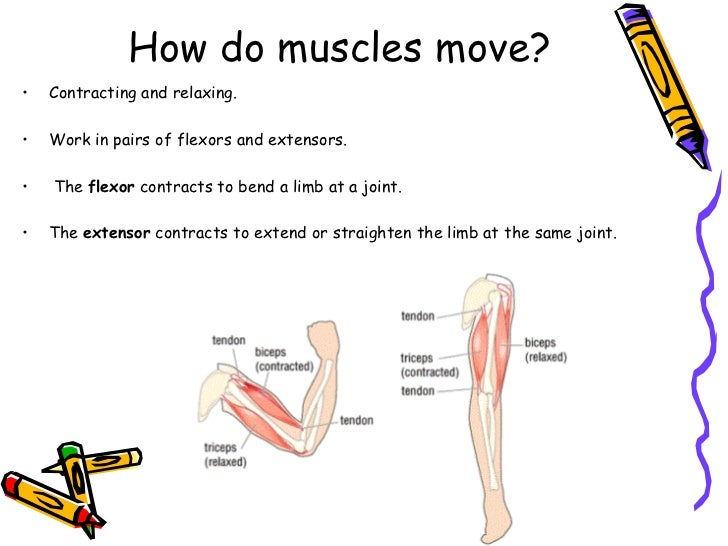 Bones, Joints and Muscles
